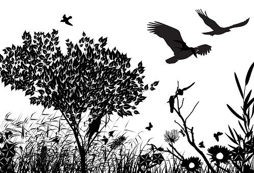 Pássaros Pretos