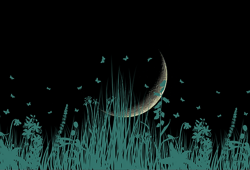 """Noite de borboletas"""