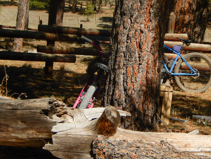 24 Hours in The Enchanted Forest:  Riding Bikes with My Family.
