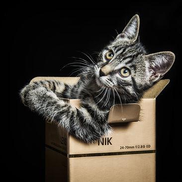 comment photographier un chat