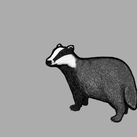 EP2 - Blaming the Badgers
