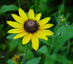 JULY HIGHLIGHT EVENT--GREAT NATIVES FOR YOUR HOME GARDENS