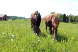 Tuotantoeläinten taivaassa haaveillaan suuresta laidunmaasta ja adoptioista
