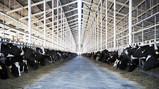 The Milk System ja maitolitran todellinen hinta