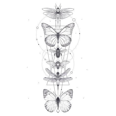 Insekten_2.jpg