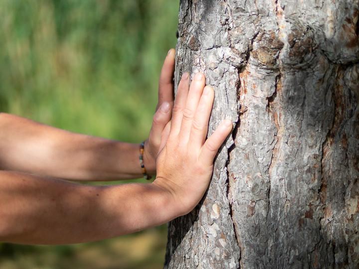 main arbre géraldine.jpg