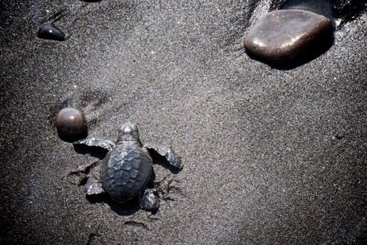 Pantai-Saba-Gianyar-1-1024x680