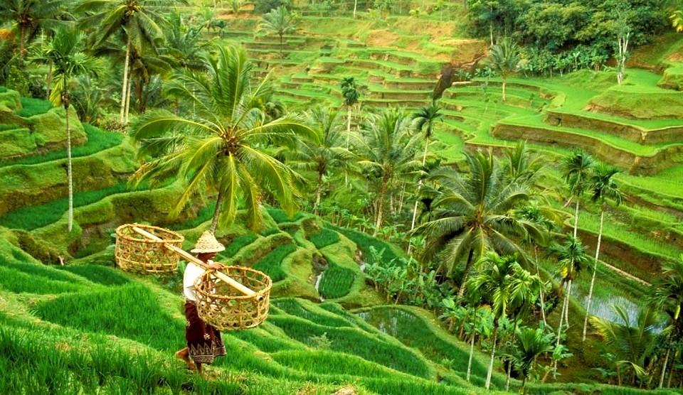 indonesien_ubud-bali_5