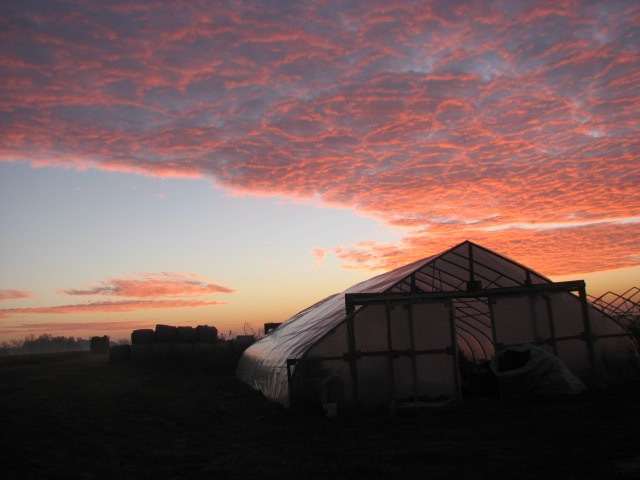 East of the greenhouse Sunrise