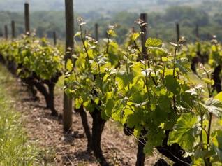 La rentrée au coeur des vignes !