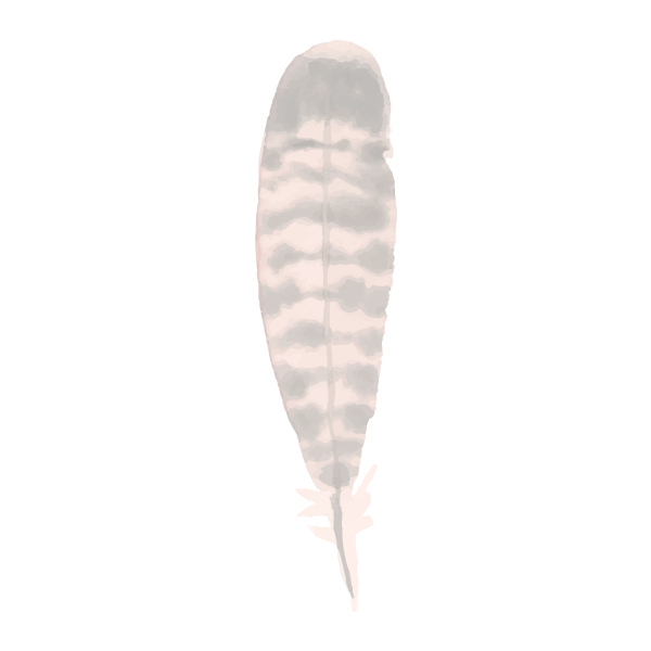 Feather%207_edited.png