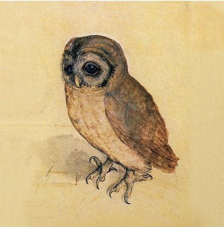 the little owl.jpg
