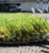 Synthetic Turf-OS30LGrass-Side.jpg