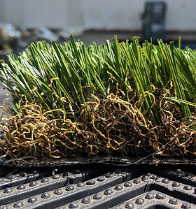 Synthetic Turf-OS10OGrass-Side.jpg