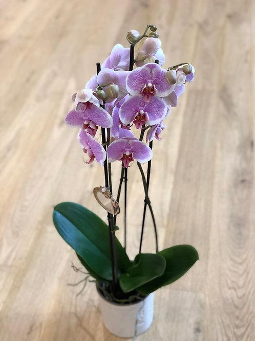 Lyserød orkidee med potte