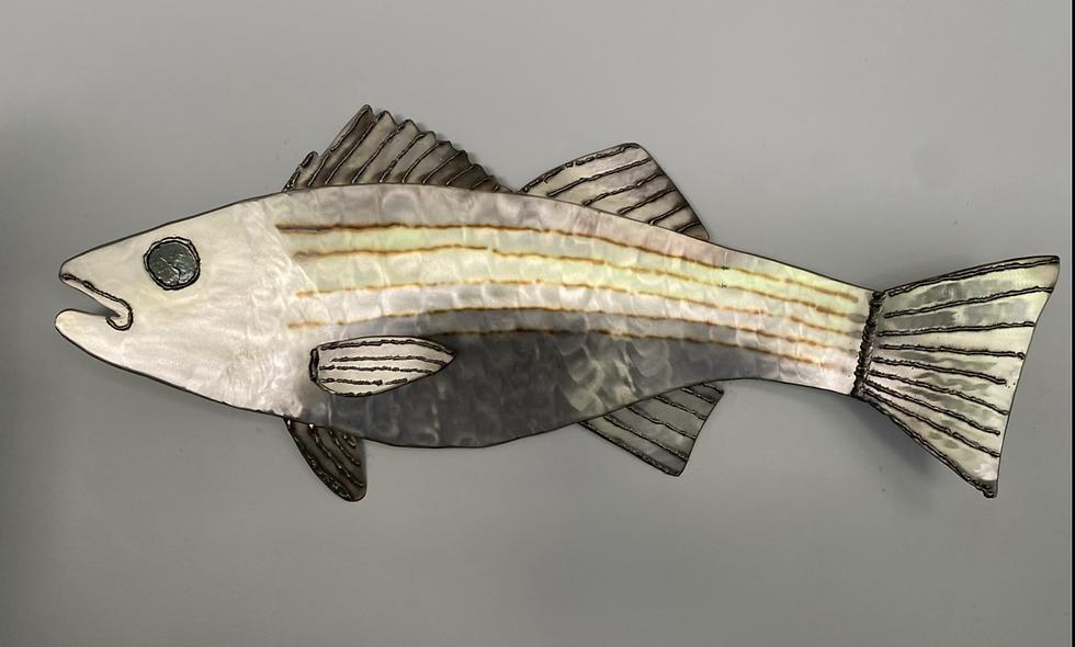 Large Striped Bass