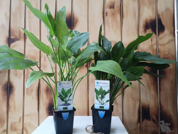 Planter med logo 1.3.jp