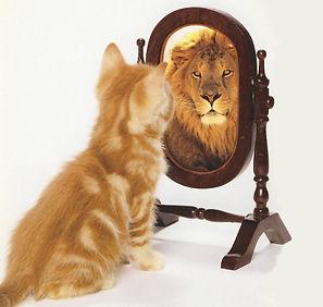 חתול-חושב-שהוא-אריה-3.jpeg