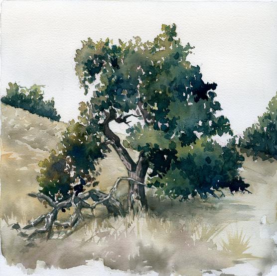 Briones Tree