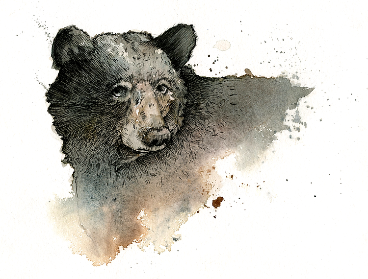 beartime.png