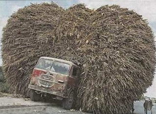 Redneck Auto-Momemts ..A Problem With A Chia-Pet and Billy Bob and Uncle Bubba Open A Driving School