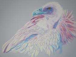 pretty-bird-of-prey