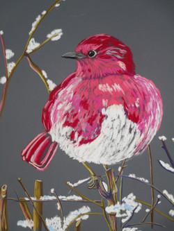 fat-rose-bird