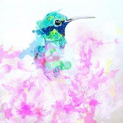 hummingbirdflutter-raines
