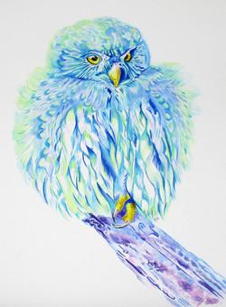 sea-owl