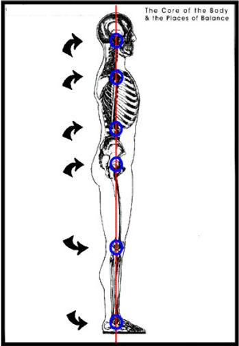 The-core-of-the-body.jpg