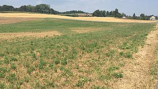 Die Dürre setzte der Landwirtschaft stark zu