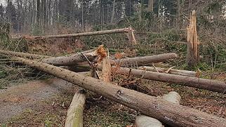 Sturm Burglind sorgte für viele Schäden