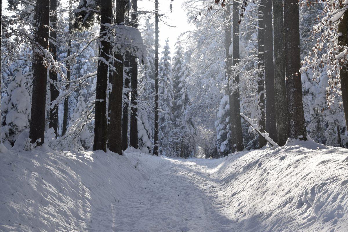 Winter im Oberfreiamt