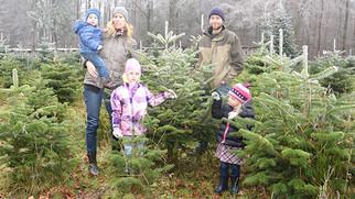 Ein Christbaum frisch aus dem Wald