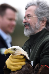 Mathias has cared for Carolina's Raptors for over 34 years