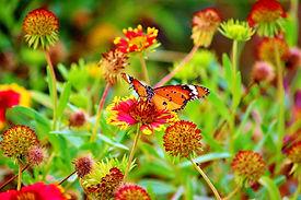 FLOWER_7168_BUTTERFLY.jpeg