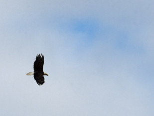 Campaign Announcement Punctuated By Eagle Release