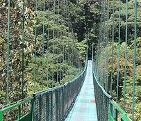 Monteverde's canopy walk .JPG