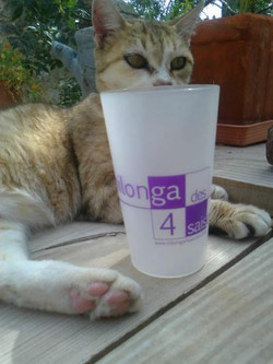 Le chat décontracté