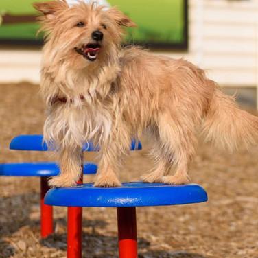 Plataformas de patas perros.jpg
