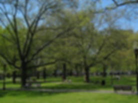 NewHavenGreen in spring.jpeg
