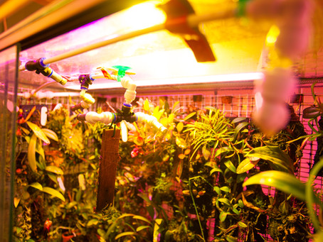 Basic Guide to Light Use When Growing Plants