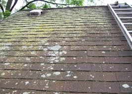 Black Mold on Roof Removal