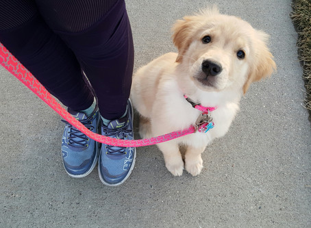 Is a dog walker really necessary for my dog?