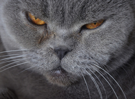 What You Can Do to Improve Your Senior Pet's Life