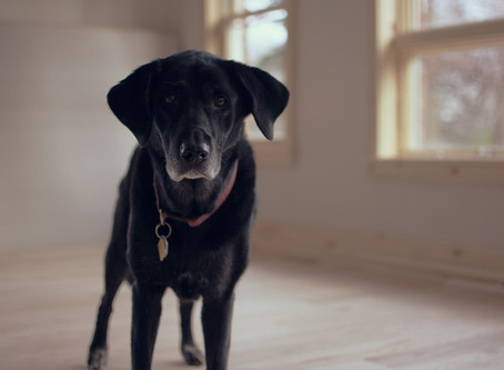 What To Know Before Adopting A Senior Pet