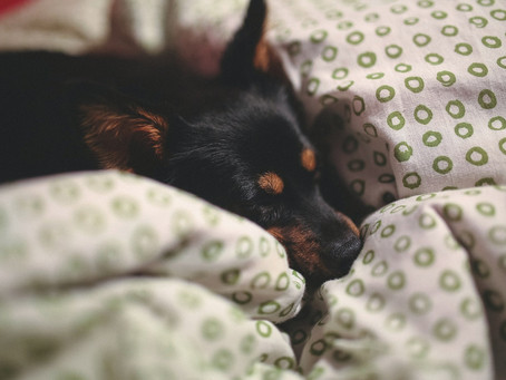 Tips for Keeping Your Pets Safe During COVID-19
