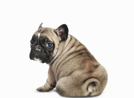 The Common Concern of Canine Anal Glands