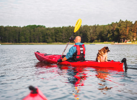 Best Adventures for Your Dog in the Southwest Metro this Summer