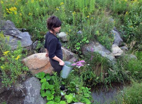 L'arrivée des fermes florales au Québec et le métier de « fermière-fleuriste »